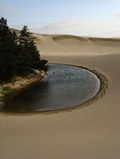 Previous pinner: the Oregon Sand Dunes.// I grew up in a place where the oregon dunes and little lakes like this were part of my backyard! This looks like my childhood! Oregon Dunes, Oregon Coast, Desert Dunes, Places To Travel, Places To See, Nature Landscape, Seen, Oregon Travel, Oeuvre D'art