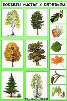 Autumn Activities For Kids, Math For Kids, Science For Kids, Science And Nature, Teaching Plants, Teaching Kids, Preschool Worksheets, Preschool Activities, Montessori Kindergarten