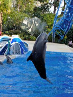Sea World ...Orlando