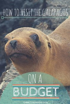 Exploring Galapagos Islands on the Cheap: A How-To Guide