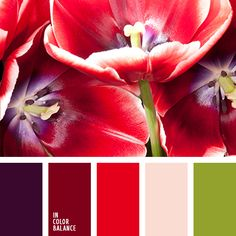 алый, бледно-пурпурный, весенняя цветовая палитра, зеленый, красный и пурпурный, красный и фиолетовый, лиловый цвет, насыщенный розовый, оливковый, оттенки заката, оттенки зеленого, оттенки фиолетового, подбор цвета, пурпурный, пурпурный и