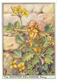 Greater Celandine Flower Fairy Print c.1950 Fairies by Cicely Mary Barker