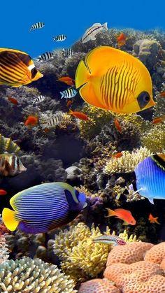 Underwater Animals, Ocean Underwater, Underwater Painting, Underwater Creatures, Ocean Creatures, Sea Photography, Underwater Photography, Marine Photography, Photography Hacks