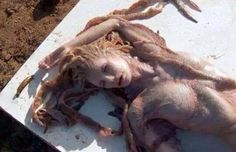 Mind-blowing Mermaid found at the beach of Hawaii and Egypt