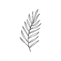 Black And White Leaves, White Leaf, Black And White Drawing, Leaf Drawing, Plant Drawing, Black Tattoos, Small Tattoos, Leaves Sketch, Leaves Doodle