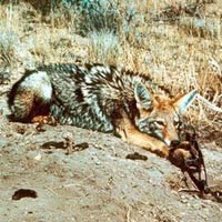 Fur Trapping  - needs to be stopped