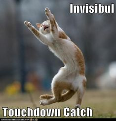 funny invisible cats  | - invisible - Page 2 - Lolcats n' Funny Cat Pictures - funny cat ...