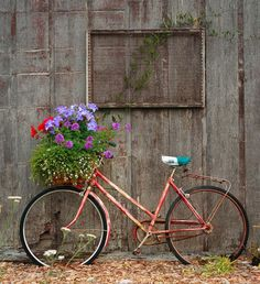 Old bicycles and flowers are made for each other!
