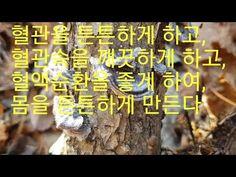 몸속의 모든 암을 추적해 한방에 죽이는 이~버섯?(차로 먹는다) - YouTube