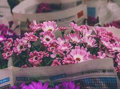 "1,230 Likes, 50 Comments - Nasim Heidari (@nasim3h) on Instagram: ""  دو قدم مانده به خندیدن برگ یک نفس مانده به ذوق گل سرخ  چشم در چشم بهاری دیگر ...   +عيدتون…"""