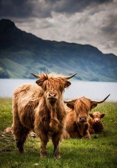 highland coosan