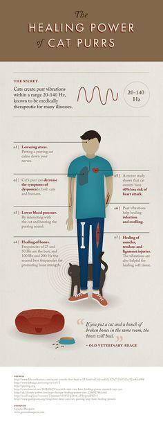 Το γουργούρισμα της γάτας έχει ιαματικές επιδράσεις στον άνθρωπο!