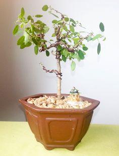 Bending Bonsai