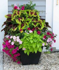 Container Gardening Ideas 50 Beautiful Container Garden Flowers Ideas 32 - Container gardens are one of the fastest growing segments of gardening. Containers can be grown where traditional gardens are not possible including apartment balconies, small .