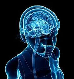 foto of brain - Illustration of female xray brain anatomy artwork - JPG