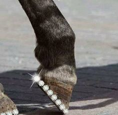 Blinging horse shoe