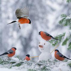 Love these bright orange breasted birds!❤