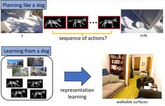 Whos a good AI? Dog-based data creates a canine machine learning system