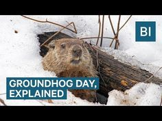 On Groundhog Day, a bunch of men, wearing suits and top hats, pull a groundhog out of a hole in Punxsutawney, Pennsylvania. They then read a scroll the groun. Human Body Temperature, Groundhog Day Activities, Writing Studio, Weather Predictions, Video Team, Top Hats, Storytelling, How To Memorize Things, Ground Hog