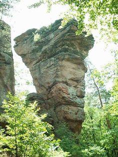 pfaelzerwald huette   Rundwanderung 18: Von Dahn zum Bärenbrunner Hof