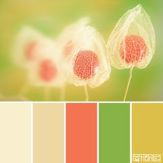 Pods #patternpod #patternpodcolor #color #colorpalettes