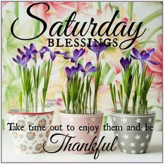 Saturday Blessings... Take time out to enjoy them and be thankful #saturday saturday quotes flowers flower pots