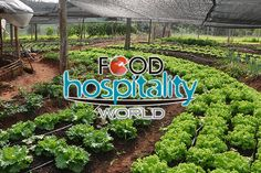Agricultura orgânica é tema de debate durante a programação da Food Hospitality World - http://chefsdecozinha.com.br/super/noticias-de-gastronomia/agricultura-organica-e-tema-de-debate-durante-a-programacao-da-food-hospitality-world/ - #Feiras, #FoodHospitalityWorld, #Orgânicos