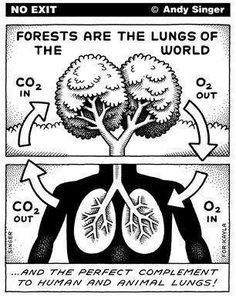 Anchor chart science breathing-Connecting with intake of oxygen using trees and lungs as comparisons.