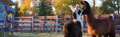 Ocoee Mist Farm Bed and Breakfast • Benton, TN