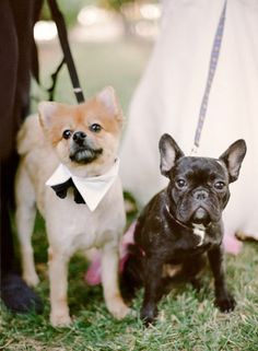 The award for ring bearer and flower girl goes to these two: http://www.stylemepretty.com/2014/12/12/romantic-santa-ynez-wedding-at-gainey-vineyard/ | Photography: Rebecca Yale - http://www.rebeccayalephotography.com/