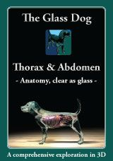 Veterinary students can now get some studying done at home to complement their gross anatomy lab. The Glass Dog is 3D software to help you study at home. http://amzn.to/2seNfsj