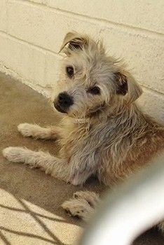 Hopeful little dog is scared, overlooked and out of time at busy animal control. At Carson animal control. My Animal, Animal Care, In Her Eyes, Pet News, Stop Animal Cruelty, Special Girl, Animal Control, Shelter Dogs, Funny Animal Pictures