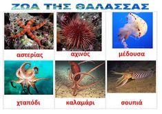 dreamskindergarten Το νηπιαγωγείο που ονειρεύομαι !: Λίστες αναφοράς για τα ψάρια και τα ζώα της θάλασσας Undersea World, Deep Sea Creatures, Summer Crafts, Kindergarten, Projects To Try, Fish, Activities, Children, Blog
