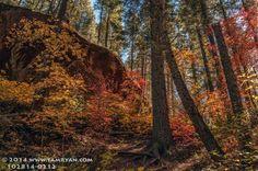 Terrestrial Encounters: Sedona Fall Color
