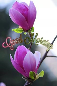 Good Morning Wishes, Good Morning Images, Morning Quotes, Day, Flowers, Hapy Day, Good Morning, Good Morning Imeges, Florals