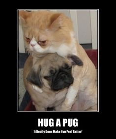 Outstanding pug dogs info is available on our web pages. Read more and you will not be sorry you did. Funny Cat Memes, Dog Memes, Funny Dogs, Funny Animals, Cute Animals, Pug Love, I Love Cats, Pugs And Kisses, Baby Pugs