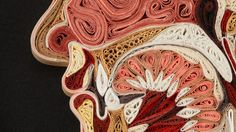 Anatomical images made with curled paper