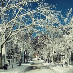 Even though Main Street looks like a winter wonderland in this photograph, looks are deceiving as Blizzard Juno was brutal. January 27-28, 2015