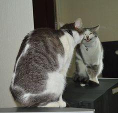 Vi è mai capitato di entrare in una stanza, rivolgere lo sguardo al vostro gatto e pensare: Deve provenire da un altro pianeta!? Con ogni probabilità la risposta è sì. Perché…