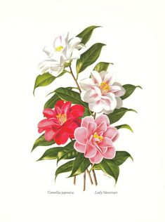 Vintage Lithographic print of flowers