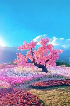 Beautiful Nature Wallpaper, Beautiful Sky, Beautiful Landscapes, Beautiful Flowers, Pink Blossom Tree, Cherry Blossom, Flower Phone Wallpaper, Nature Aesthetic, Beautiful Places To Travel