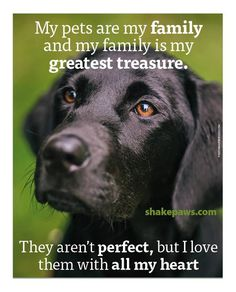 We are blessed to be the human guardians to four precious dogs, five precious cats, two angel dogs, and five angel kitties. There is not greater love. JM <3