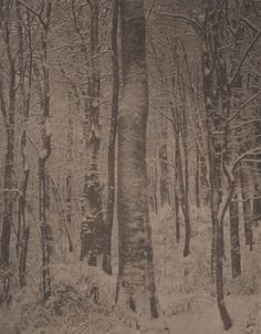 Takeshi Shikama Contemporary Photography, Landscape Photography, Natural World, Photo S, Scene, Tapestry, Blur, Nature, Poems