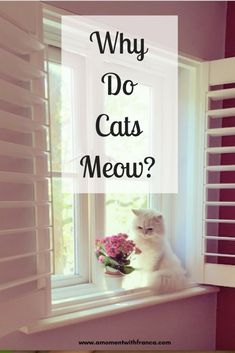 Why Do Cats Meow? Everything uo ever wanted to know about our feline friends and why they miaow! All About Cats, I Love Cats, Diy Design, This Is Us, In This Moment, Pets, Group Boards, Friends, Animals