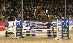 Valentino - (Now or Never x Belisar x Pandoer) - 2002 KWPN Chestnut Stallion - Dreamscape Farm, Langley, BC, Canada