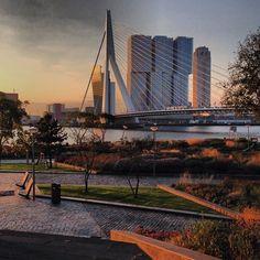 That's Rotterdam in the morning;  - Erasmusbridge (by Ben van Berkel) - De Rotterdam (by Rem Koolhaas) - Leuvehoofd Park (by Piet Oudolf)  Picture by nhow Rotterdam https://www.facebook.com/pages/nhow-Rotterdam/578497992169262?fref=ts