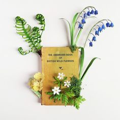 Modern Art for Sale at Thompson's Galleries: Observer Book of Wild Flowers, Mixed Media