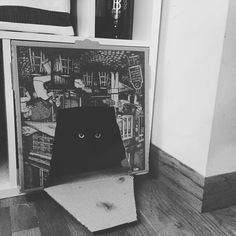 Pizza box hideout worked #catsofinstagram