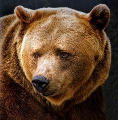 Grizzly Portrait by Barbara Motter on 500px