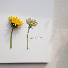 A tiny dandelion for a tiny new watercolour pad. I've decided to fill it with the smallest flowers that I can find! Have a lovely evening